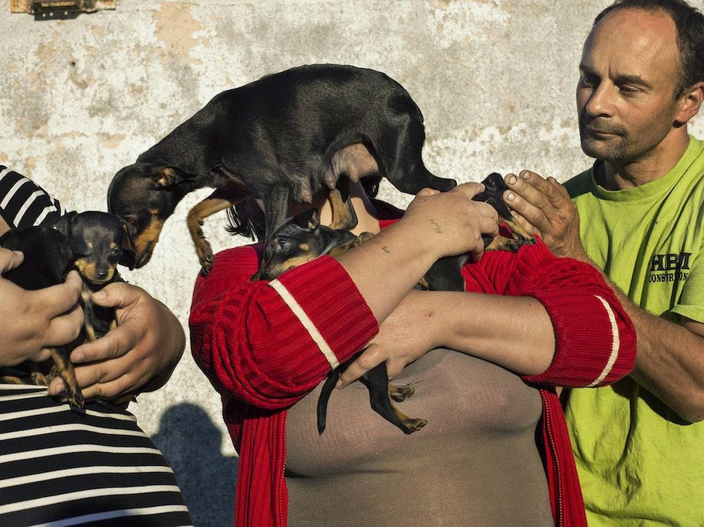 <i>The puppies, Les Attaques, Pas-de-Calais, 2016,</i> Gendarme Sur La Colline (2017)