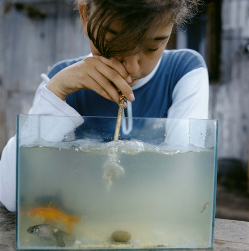 <i>Fishtank, 2003</i>, The Adventures of Guille and Belinda and The Enigmatic Meaning of Their Dreams I